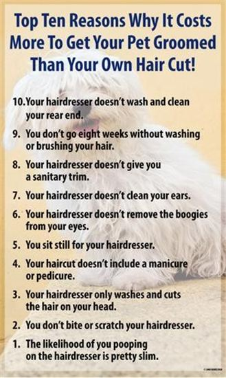 10 reasons why it costs so much for a Dog groomer