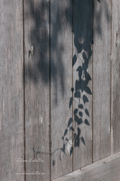 shadows on fence by ©Diane Schuller