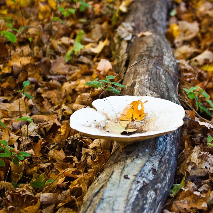 www.dianeschuller.com Autumn in the forest