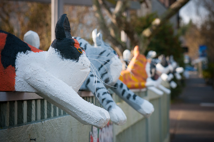 cats on the fence, downtown Qualicum Beach, BC --©Diane M Schuller
