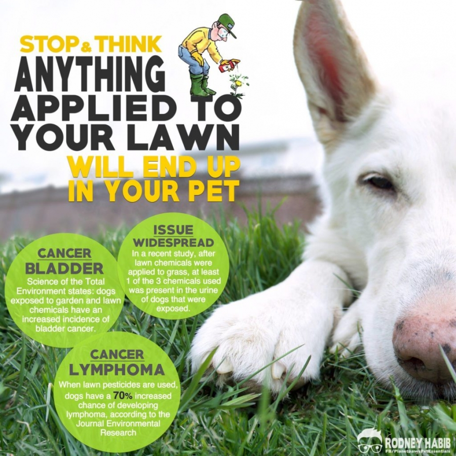 Lawn herbicides and your family pet
