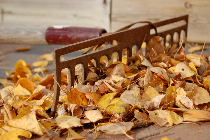 old rake and leaves, ©Diane M Schuller
